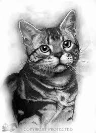 realistic cat drawing in pencil. Modren Pencil Realistic Graphite Pencil Drawing Cat Starring On In I