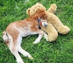 baby mini horse. Modren Horse Tinyhorses20__605 Inside Baby Mini Horse