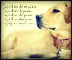 Quotes About Pets And Friendship Simple Inspirational Quotes About Losing A Dog Stomaplus Best Quotes