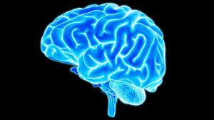 human brain essay human values essay in telugu dissertation le theatre un human brain essay drodgereport web fc com