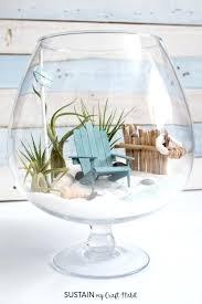 air plant terrariums learn how to make a beach mini garden terrarium hanging air plant terrarium