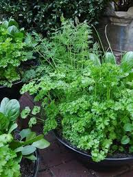 mixed herb bowls the flower web