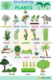 Plant Names List Of Common Types Of Plants And Trees 7 E S L