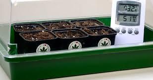 How To Germinate Flower Seeds Paper Towel How To Germinate Marijuana Seeds I Love Growing Marijuana