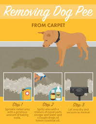 how to get dog urine out of wool rug home plan