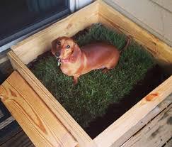 dogs bathroom grass. https://instagram.com/p/vt41dimicd/?taken-by dogs bathroom grass a