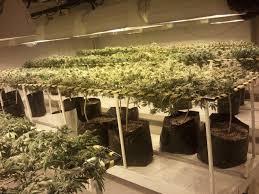 Grow Room Setup The Perfect Cannabis Grow Room Design U0026 VideosPerfect Grow Room Design
