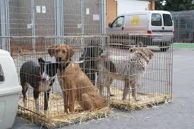 Puppy Asiel Belgie