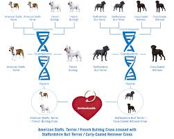 Staffy Colours Chart Perspicuous French Bulldog Dna Chart French Club Chart