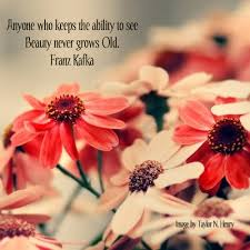 See The Beauty Quotes Best of Beauty Never Grows Old Beauty Quote Quotespictures
