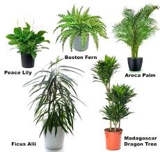 tropical office plants. Common Indoor Plants 100 House Best 25 Tropical Ideas On Names Of Office