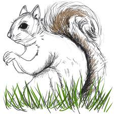 Small Picture Squirrel 10000 Bad Drawings