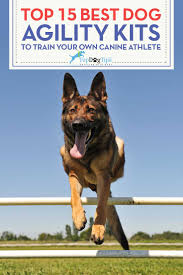 top 15 best dog agility equipment kits for dogs