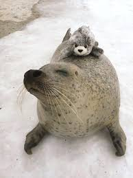 stuffed s near me adorable seal with toy big glitter eyes for es small easter in