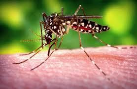 Resultado de imagem para zika