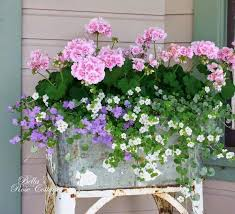Best 25 Container Plants Ideas On Pinterest  Container Flowers Container Garden Ideas Pinterest