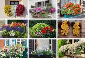 Examples of Flower Boxes
