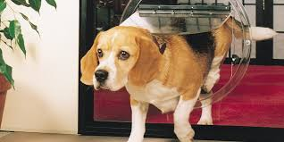 dog doors australia cat doors glass dog doors in glass
