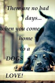Cute Dog Quotes For Instagram Inspiration Cute Dog Quotes For Instagram Packed With Funny Dog Quotes Best Cute