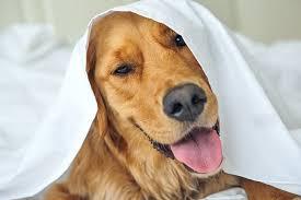 Luxury Dog Grooming & Dog Spa in Malvern PA & Philadelphia Main Line
