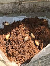 カブトムシ 育て 方 幼虫