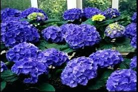 garden flower names names of blue
