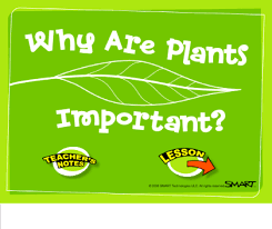The importance of plants ...