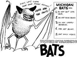 Bat Species Chart Dnr Bats