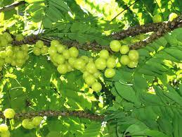 Fruit Plants In Kerala  All The Best Fruit In 2017Kerala Fruit Trees