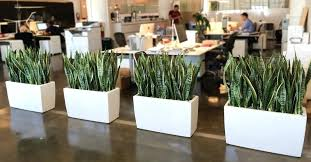 office cubicle plants. Cubicle Office Plants E