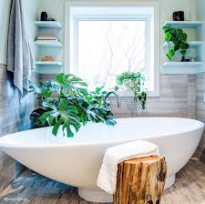 best indoor plants for bathrooms interior design inspo tree hut wooden watches