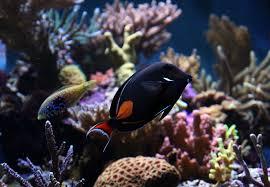 Image result for cost of aquarium maintenance