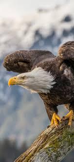 1242x2688 Bald Eagle 4k Iphone XS MAX ...