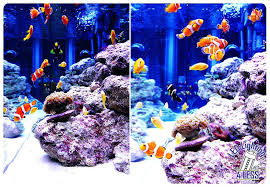 led lighting for reef tanks uk r tank fish cs flourishing red aquarium light