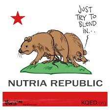 Image result for photo of nutria Cal.