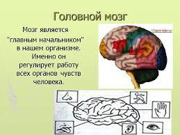 Реферат головной мозг класс > решение найдено Реферат головной мозг 4 класс