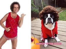 richard simmons shorts for sale. dear ellen let s get physical project dog; richard simmons shorts for sale