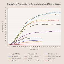 Papillon Growth Chart Feeding Your Puppy To Ensure Healthy Growth Diamond Pet Foods