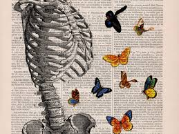700x525 drawings on book pages these anatomical drawings on old book pages