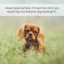 Loss Of A Pet Quote 100 Powerful Quotes About Losing a Dog Dealing With Grief Puppy Leaks 10