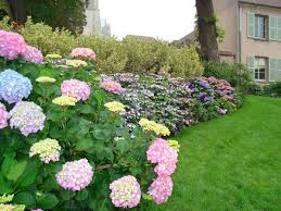 Flower Bed for Small Yards