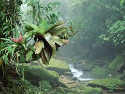 tropical rainforest wallpapers desktop