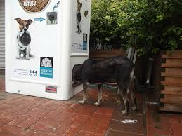Dog Park Vending Machines Classy This Machine Feeds Stray Animals In Exchange For Recycled Bottles