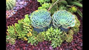 Small Picture Succulent Garden Design Secrets YouTube