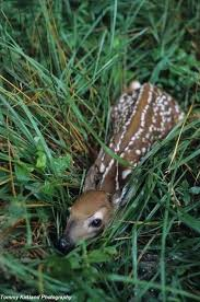 deer bedding cute animal pictures