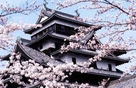 """Résultat de recherche d'images pour """"cerisier japonais"""""""