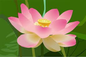 1,000+ Free <b>Lotus Leaf</b> & <b>Lotus</b> Images - Pixabay