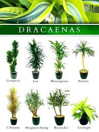 green plants names house plants names indoor plants names and pictures beautiful plant ideas on best green plants names