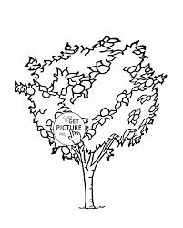 Small Picture Orange Tree fruit coloring page for kids fruits coloring pages