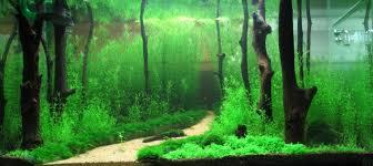 Fish Tank Background Printable Unique Aquarium Backgrounds